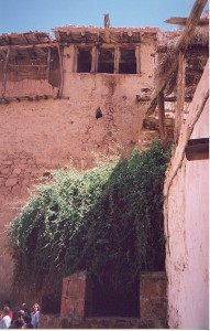 The burning bush at Mt Sinai. How do I know it's the burning bush? Because the monks tell me so. (Image Schroeder, 1999)